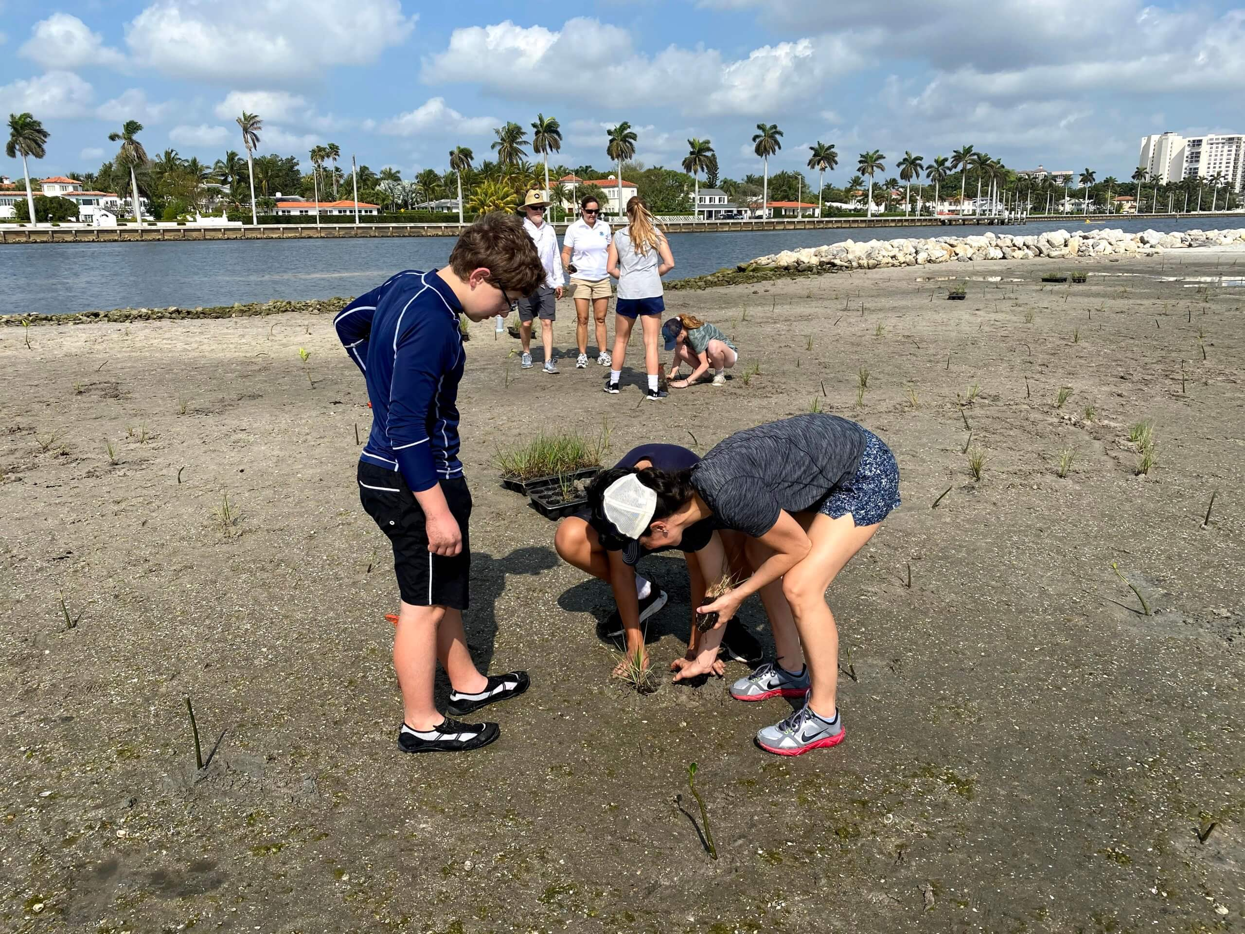 PBDA plants mangroves at tarpon cove
